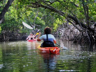 the mystic mangrove